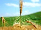 Consortiile agrare cooperatiste din Italia